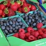 berry trays 008 slide