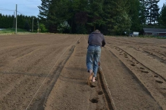 1_neufeld-farms-planting